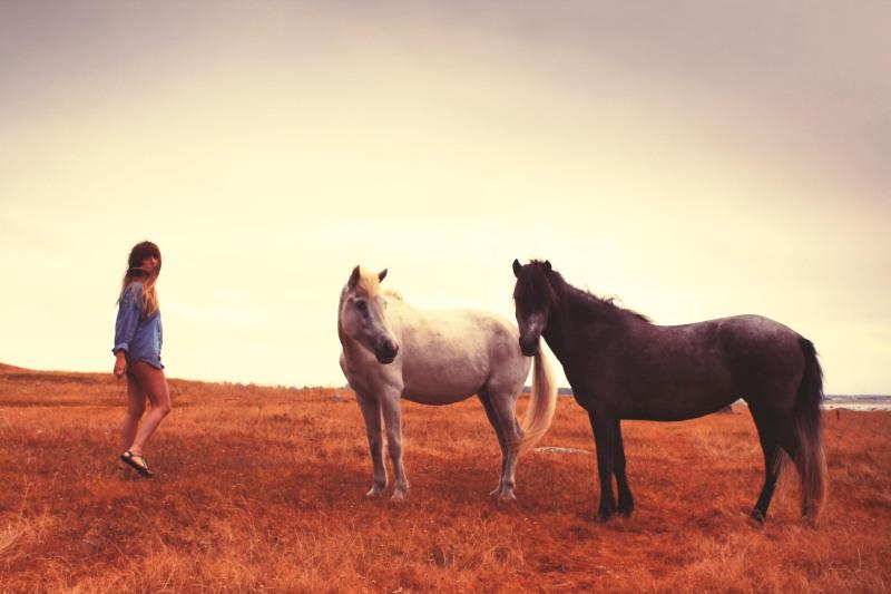 horses nyyareeIMG_5221