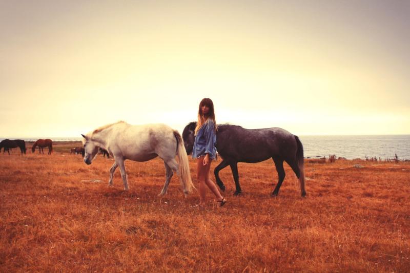 horsesrrIMG_5252